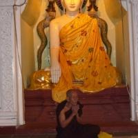 monkbuddha2